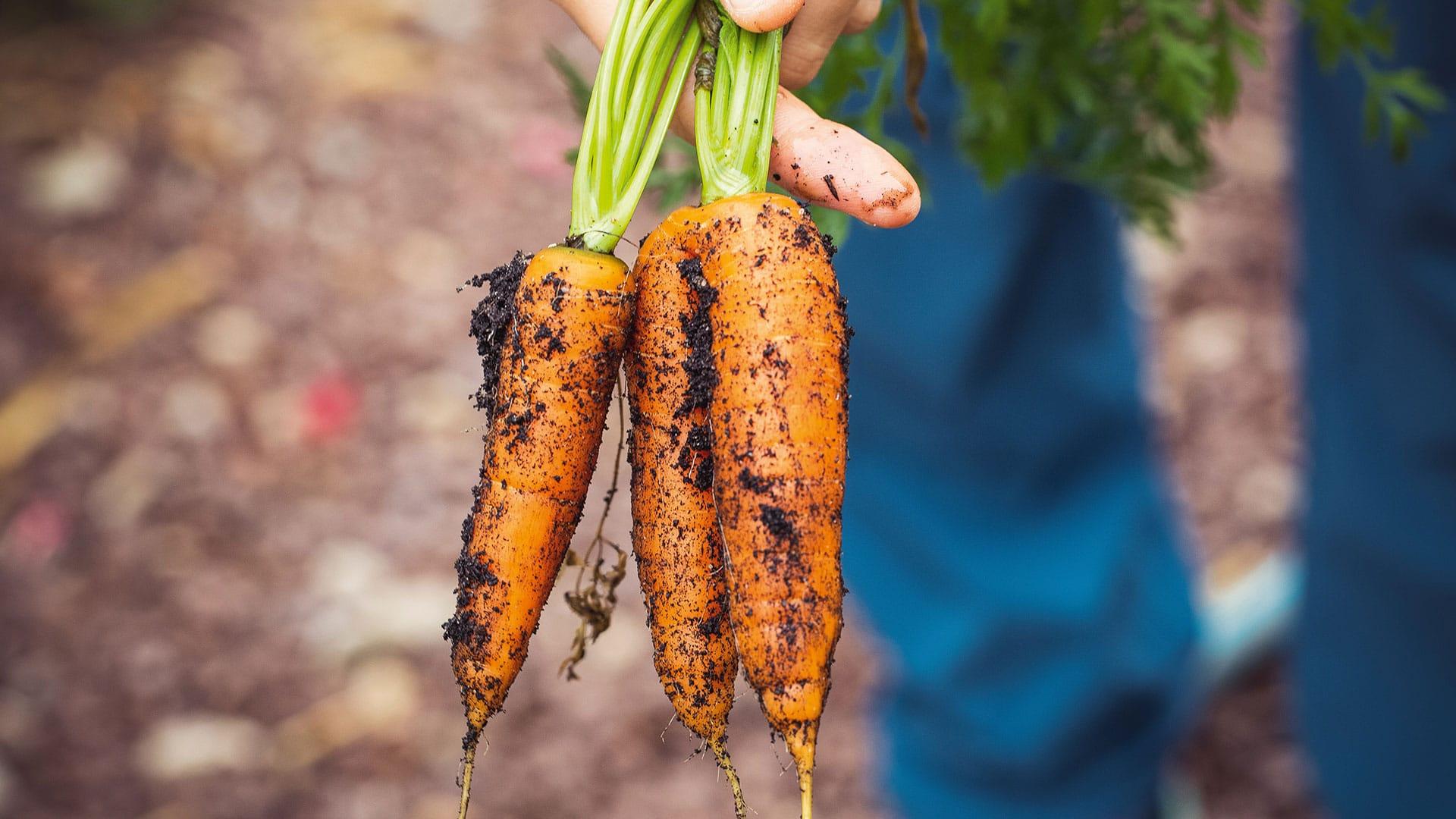 Close up van wortels met aarde