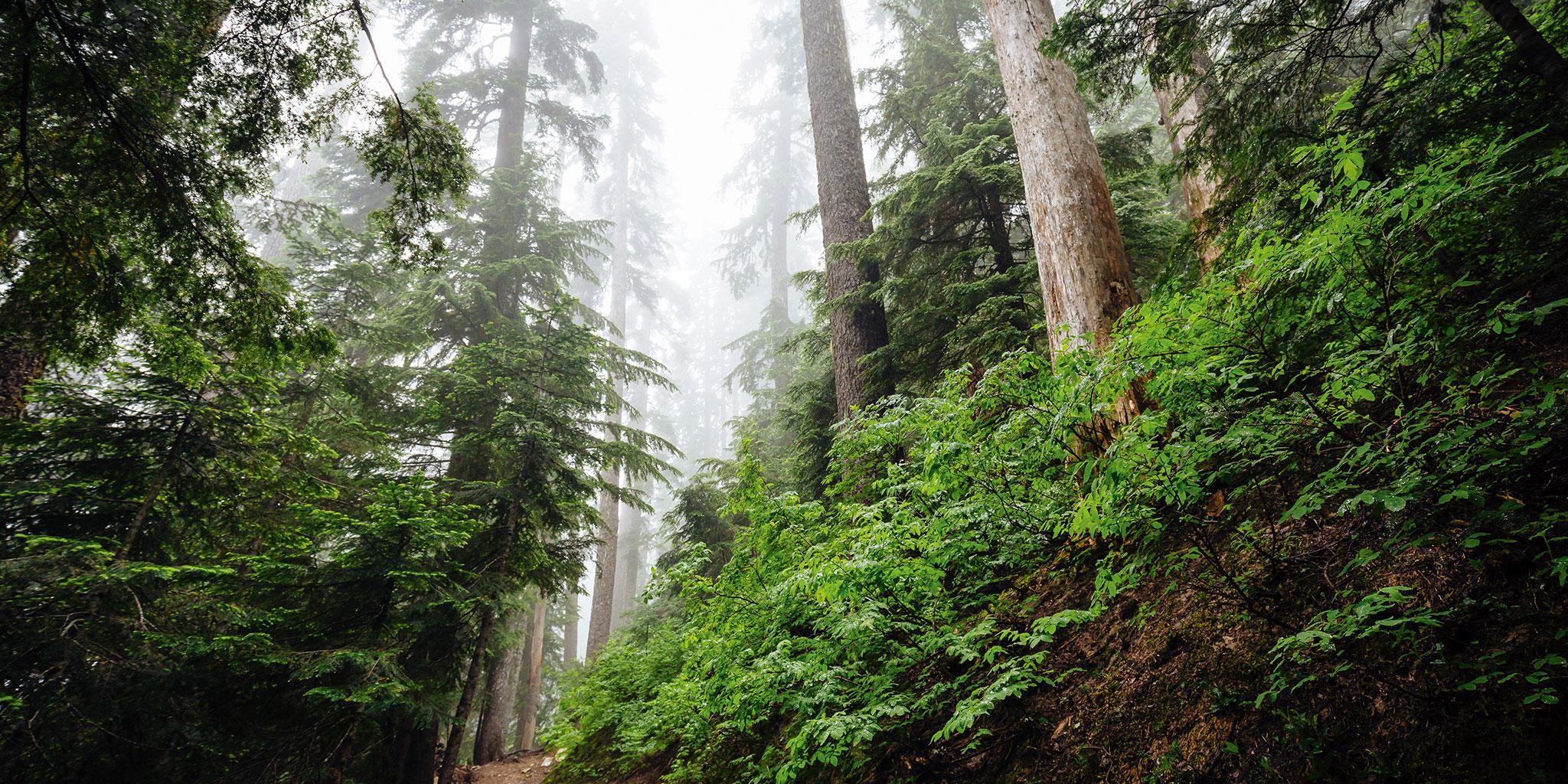 afbeelding van bomen
