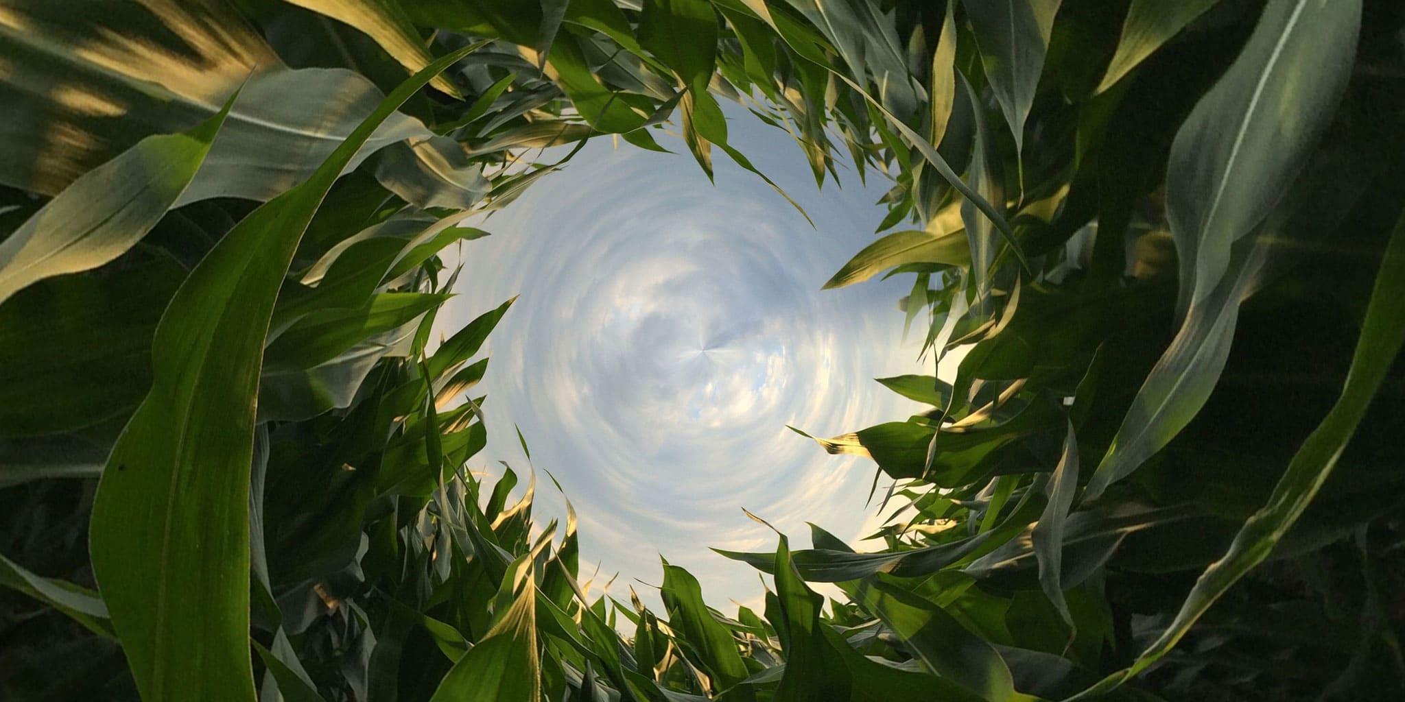 Fokus-Milieu-groene planten met een stukje lucht