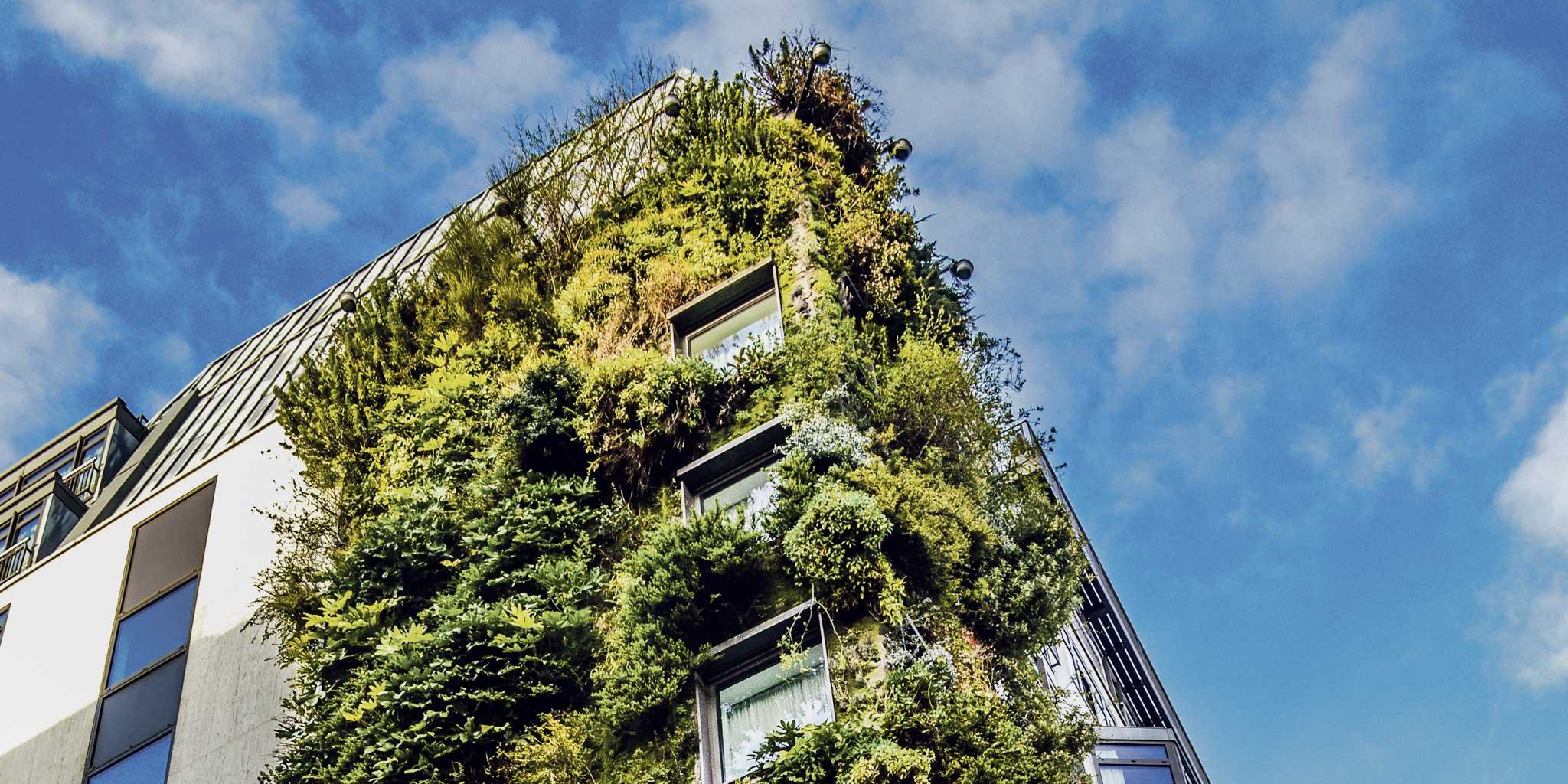 Huis met groene wand
