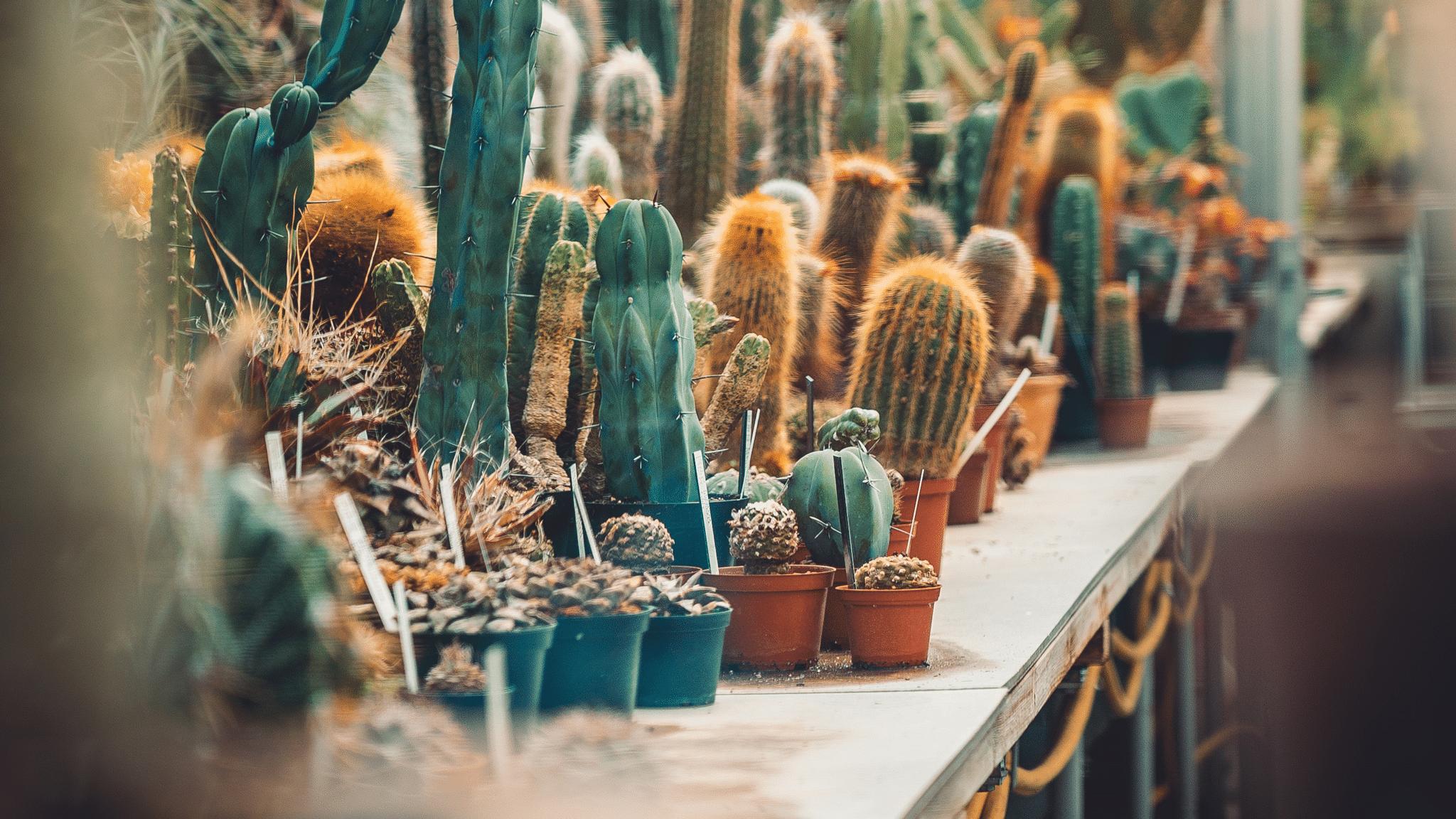 Verschillende soorten cactussen