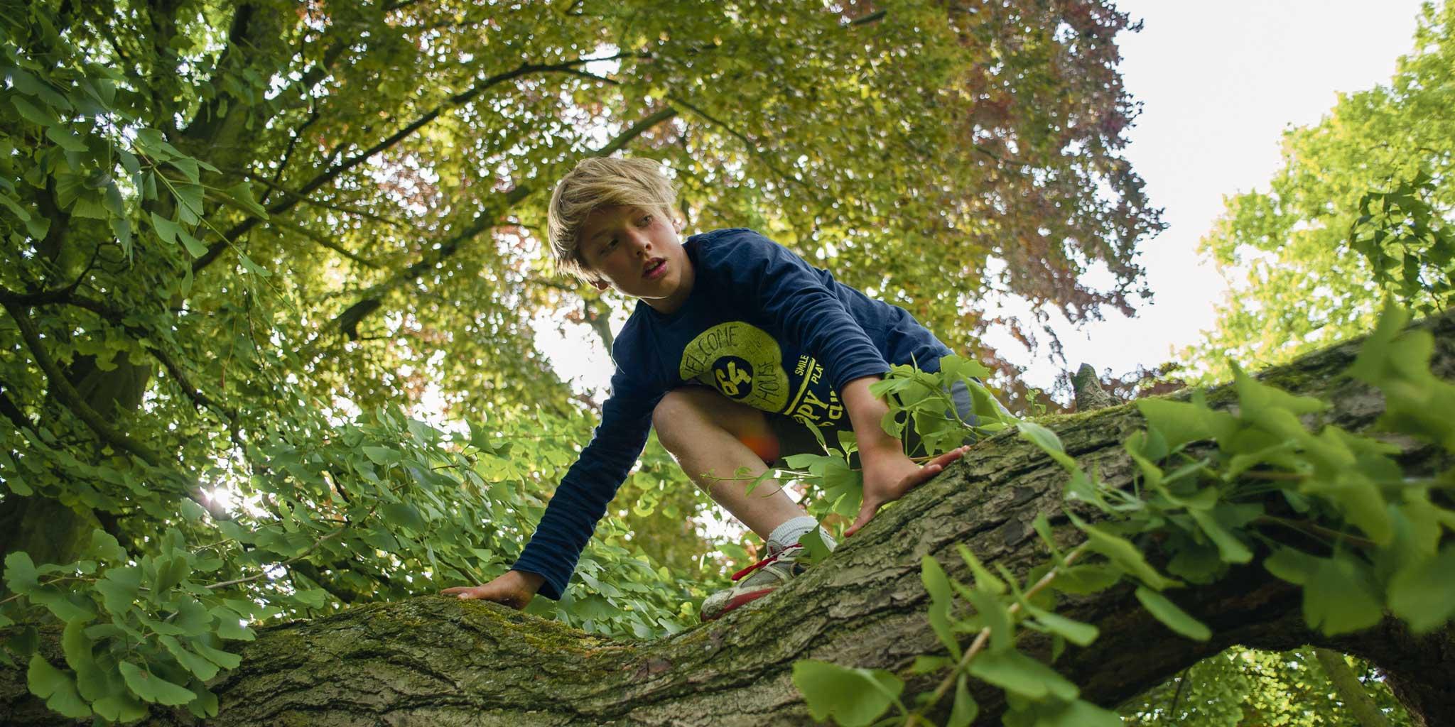 jongetje in de bomen